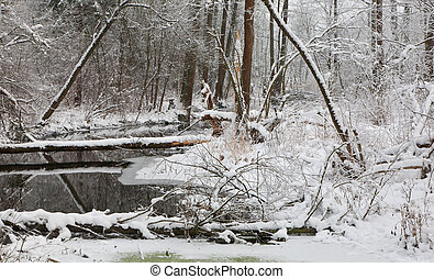 Snowy riparian forest over river with alder trees and broken...