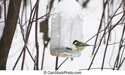 Titmouse birds at birdhouse - Titmouse birds eating at...