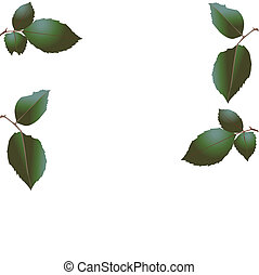 Green leaves of a tree. Vector