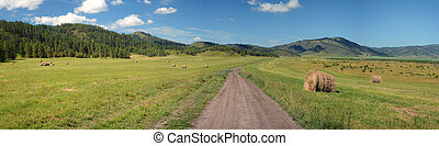 Dirt road in a field with hay rolls