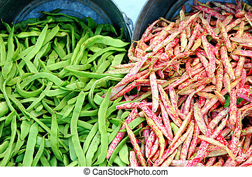 String beans - Fresh organic string beans picked from the...
