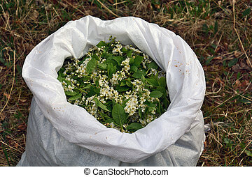 Flowers bird cherry in the bag, preparation of a medicinal...