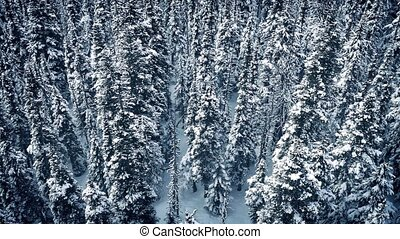 Flying Over Frozen Snowy Trees - Aerial shot moving above...