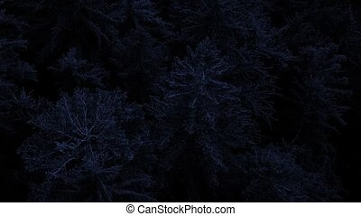 Flying Over Trees In The Dark - Aerial view floating above...