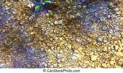 Insect Larvae Swimming Illinois - Hundreds of insect larvae...