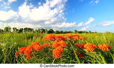 Butterfly Milkweed Landscape