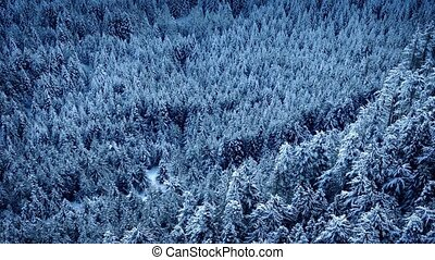 Flying Slowly Over Snowy Forest