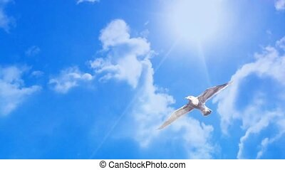 bird fly in cloud time lapse background