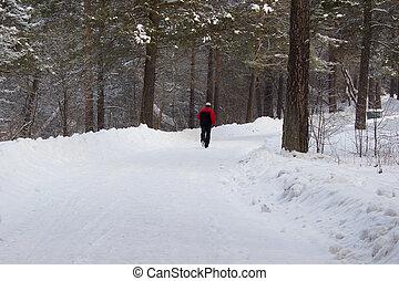 Executando, homem, floresta, Inverno