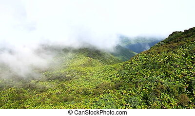 Puerto Rico El Yunque Forest - Cloud covered rainforest...