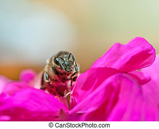 bee collecting nectar from flower