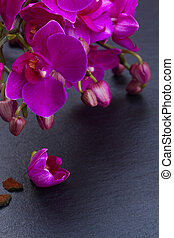 Bunch of violet orchids - Bunch of fresh violet orchid...