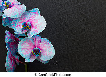 Bunch of violet orchids - Blue orchid flowers on black...