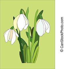 snowdrop - White snowdrop with green leaves
