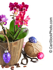 Spring violet orchids - Spring pink orchids in pots with...