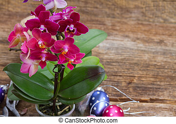 Spring violet orchids - Spring pink orchids with easter eggs...