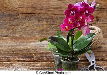 Spring violet orchids - Spring pink orchids on wooden...