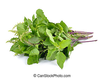 Holy basil or tulsi leaves isolated on white background