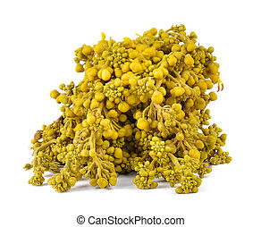 Glaucous Cassia flower on white background