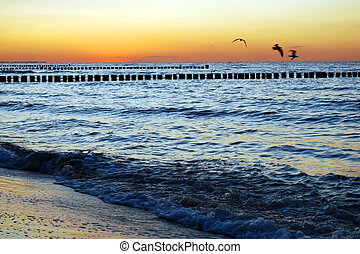 seagulls sunset - seagulls at sunset at the baltic sea