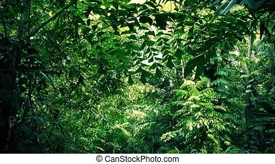 Moving Under Dense Jungle Canopy - Gliding through tropical...