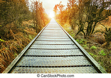 sun rising end of perspective wood walking path in natural...