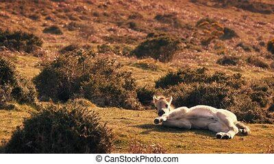 Baby Horse Get Up And Leaves - Very young foal in sunny...