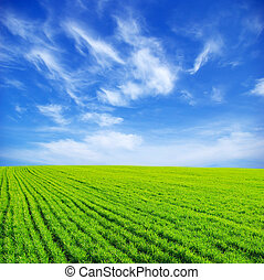field - Green grass the blue sky and white clouds