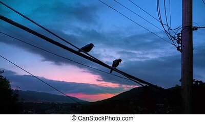Birds On Telephone Lines Fly Away - A couple of birds sit on...