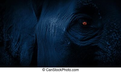 Elephant Face With Eye Glowing - Closeup of elephant face at...