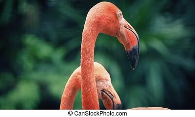 Flamingos In Tropical Landscape - Flamingos moving around in...