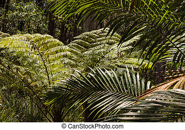 fern and palm tree fronds