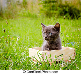 small kitten in wood box