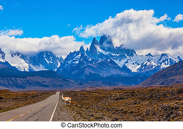 The Mount Fitzroy and guanaco - The highway crosses...