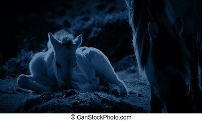 Horse And Foal Grazing In Moonlight - Horse grazes next to...