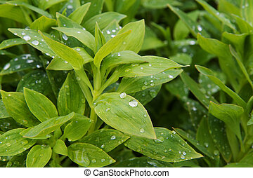 Rain drops on green plant surrounded by softer focus plants