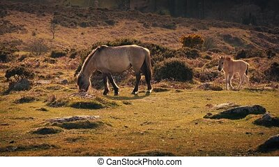 Horse Foal And Mother At Sunset