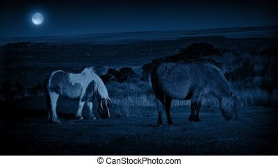Horses Grazing At Night With Moon