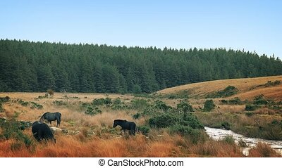 Horses Grazing Next To River