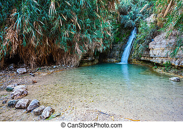 The national park Ein Gedi, Israel - Beautiful waterfall and...