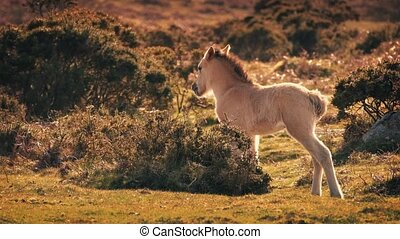 Infant Horse In The Wilderness - Young foal standing in...