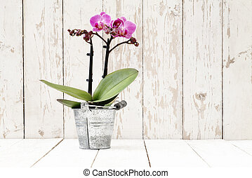 purple orchid in metal pot, on white wooden planks - puple...