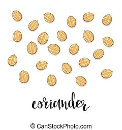 Coriander isolated object sketch. Spice for food. Culinary...