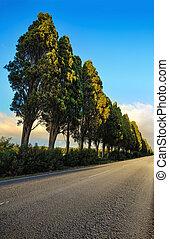 Bolgheri famous cypresses tree straight boulevard on sunset...