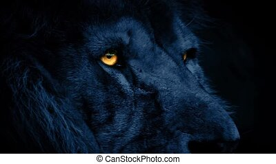 Lion Face At Night With Glowing Eye