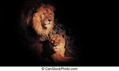 Lions In The Shadows