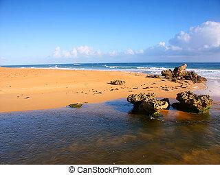 Australia Estuary Landscape - Pacific Coastline scenery in...