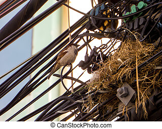 Bird nest on electric line - The family of bird live in nest...