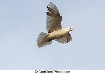 white dove flying against the sky