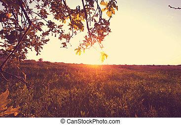Grassland - Spring grassland